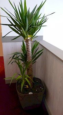plante d'agrément à l'étage